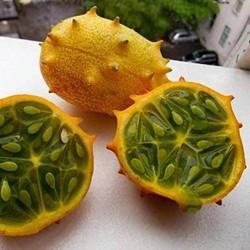 10 Semillas de Kiwano, Melón Cornudo, Pepino Africano o Melón de Cuernos, Jalea melon (Cucumis metuliferus)